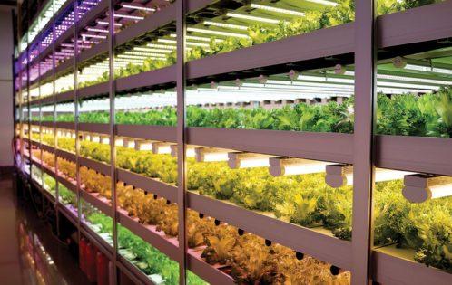 JPFA-vertical-farm